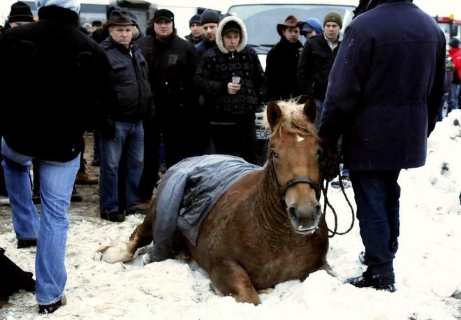 Pferdemarkt6_Polen-Skaryszew