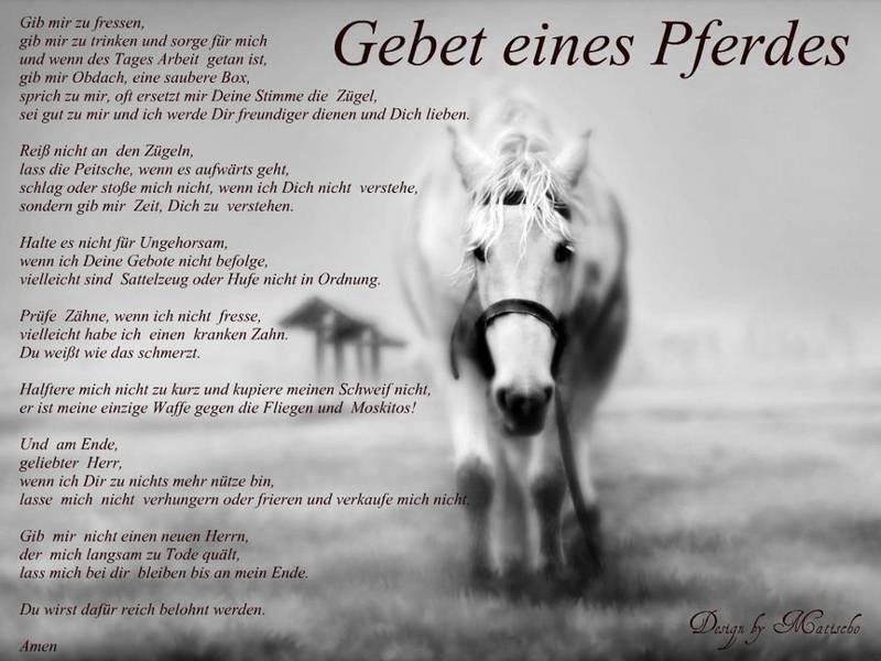 Pferd-2_Gebet-gross