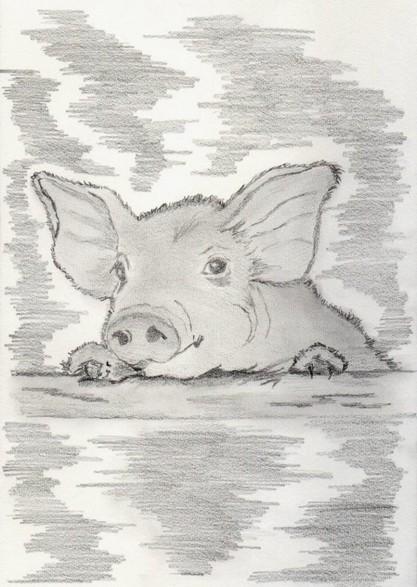 Schwein-Gra-D-Böhm