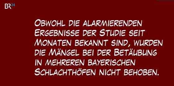 schweine_bay-betaub-fehlge