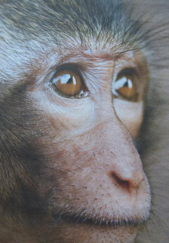 Primaten_TV-Mag-P189_cr