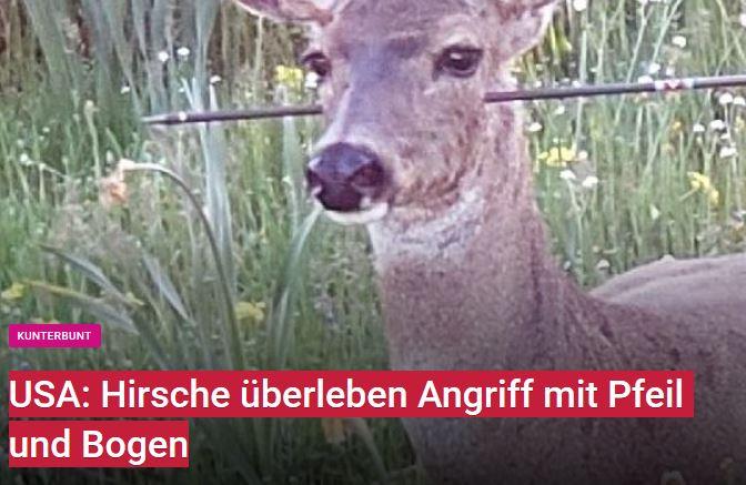 Hirschkuh-Pfeil-d-Kopf_USA