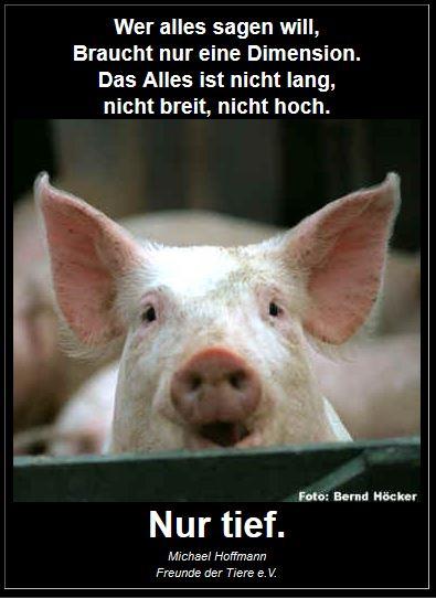 Schwein-Tierschu-nur-tief