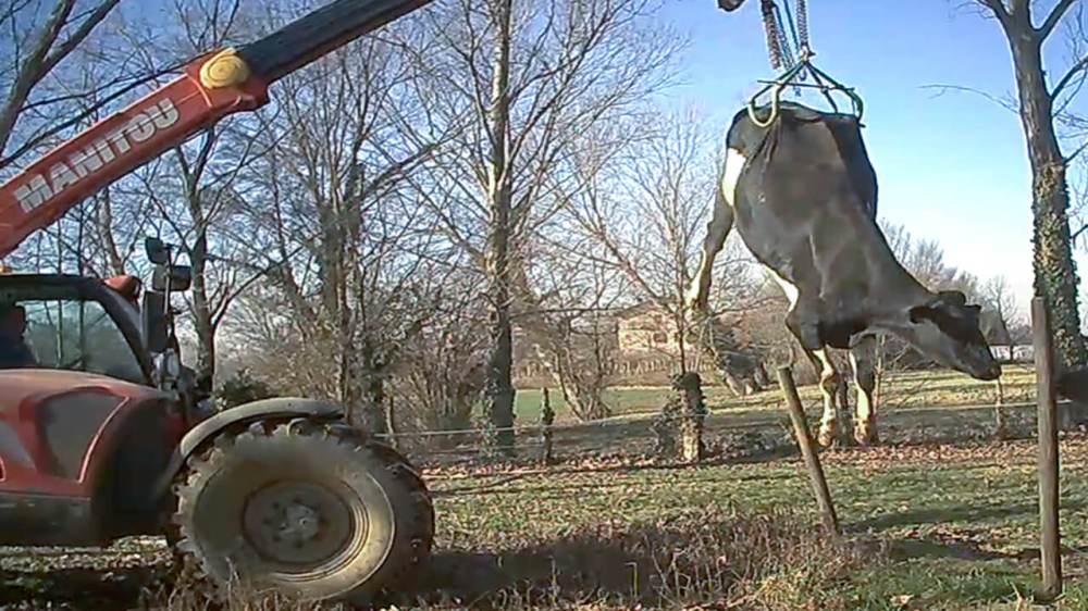 mucche-terra-allevamenti-mucche-latte_essereanimali