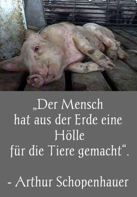 h__lle-f-tiere-schopenhauer