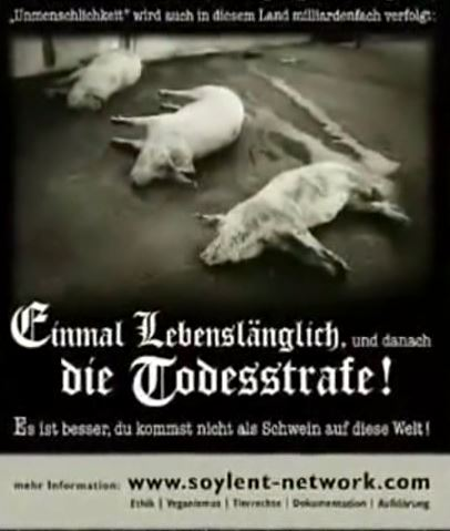 lebensl__ngl-dana-todesstrafe