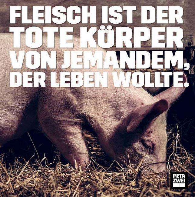 Schwein-d-leben-wollte