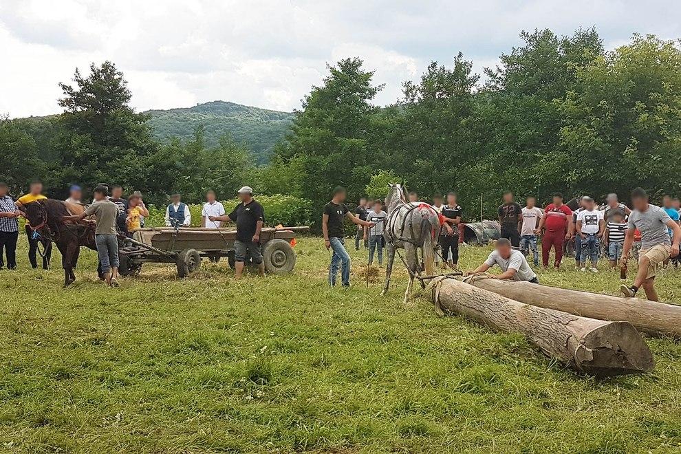 2019-07-13-pferdemarkt-rumaenien-arges-163130-c-peta-d