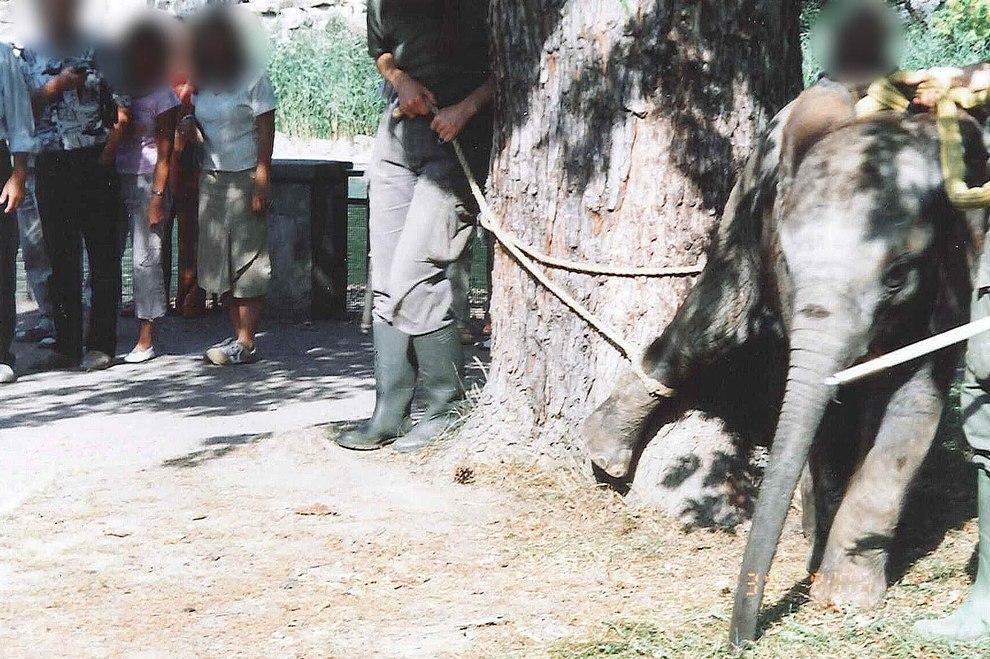 2007-elefant-thabo-zoo-dresden-11-c-peta-d