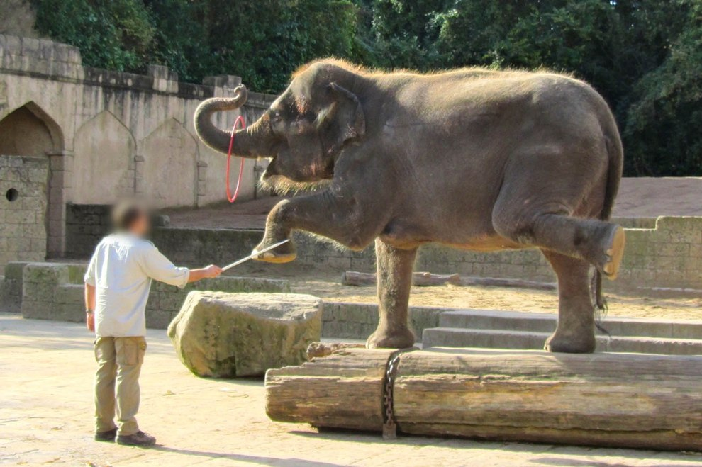 2014-10-14-elefanten-zoo-hannover-img_7334b-c-peta-d