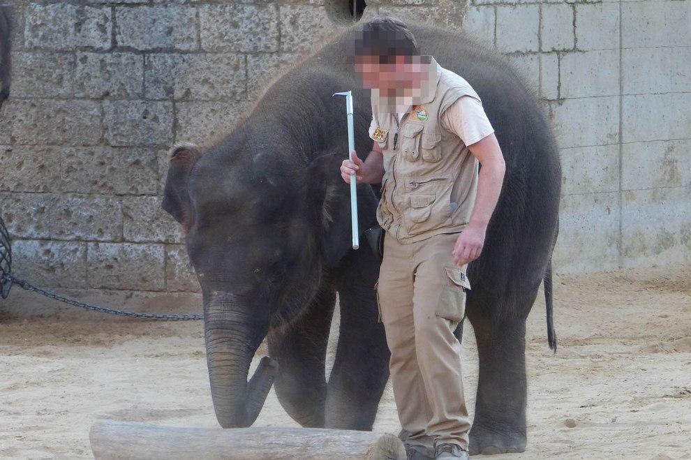 2016-10-22-elefanten-zoo-hannover-p1080126-pix-c-peta-d