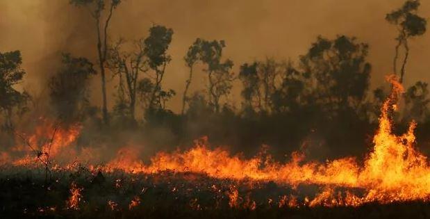 Amazonas-Bolsonaro-es-brennt