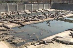 2014-krokodilfarm-exotenleder-zimbabwe-01-c-peta-usa